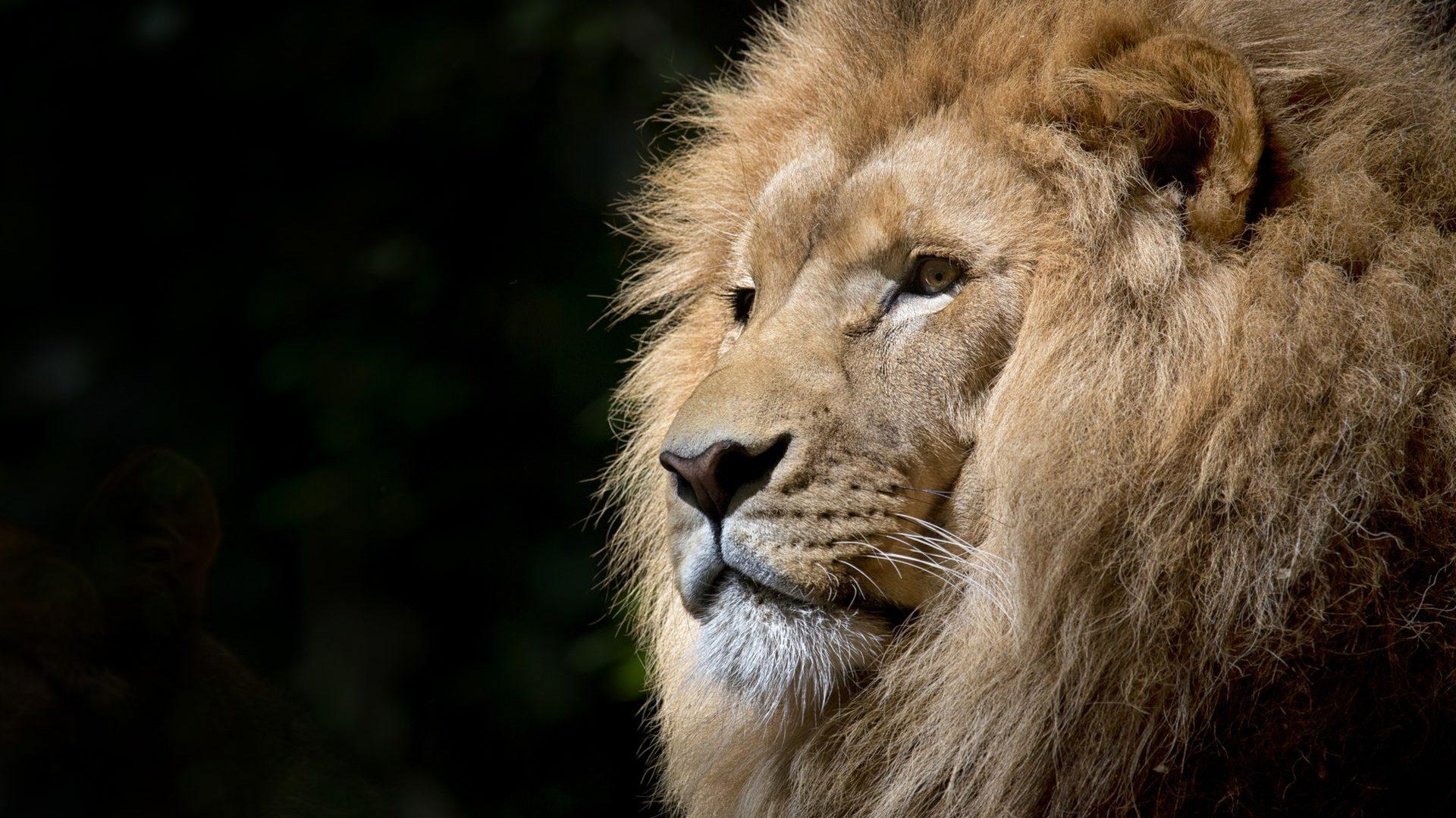 Gallatin Empire Lions Club